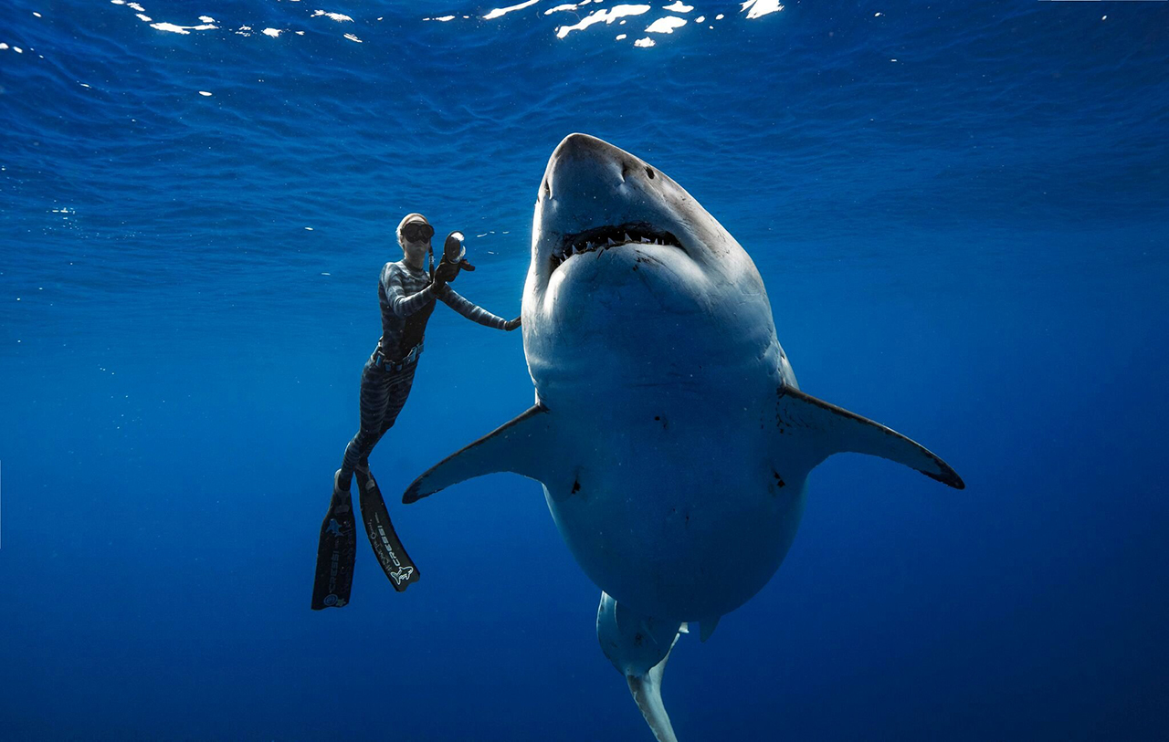 "Ocean Ramsey, a marine biologist, <a href=""https://www.nbcnews.com/news/us-news/marine-biologist-swims-20-foot-long-great-white-shark-n960241"">swims with a 20-foot great white shark</a> off the coast of Hawaii, on Jan. 15."