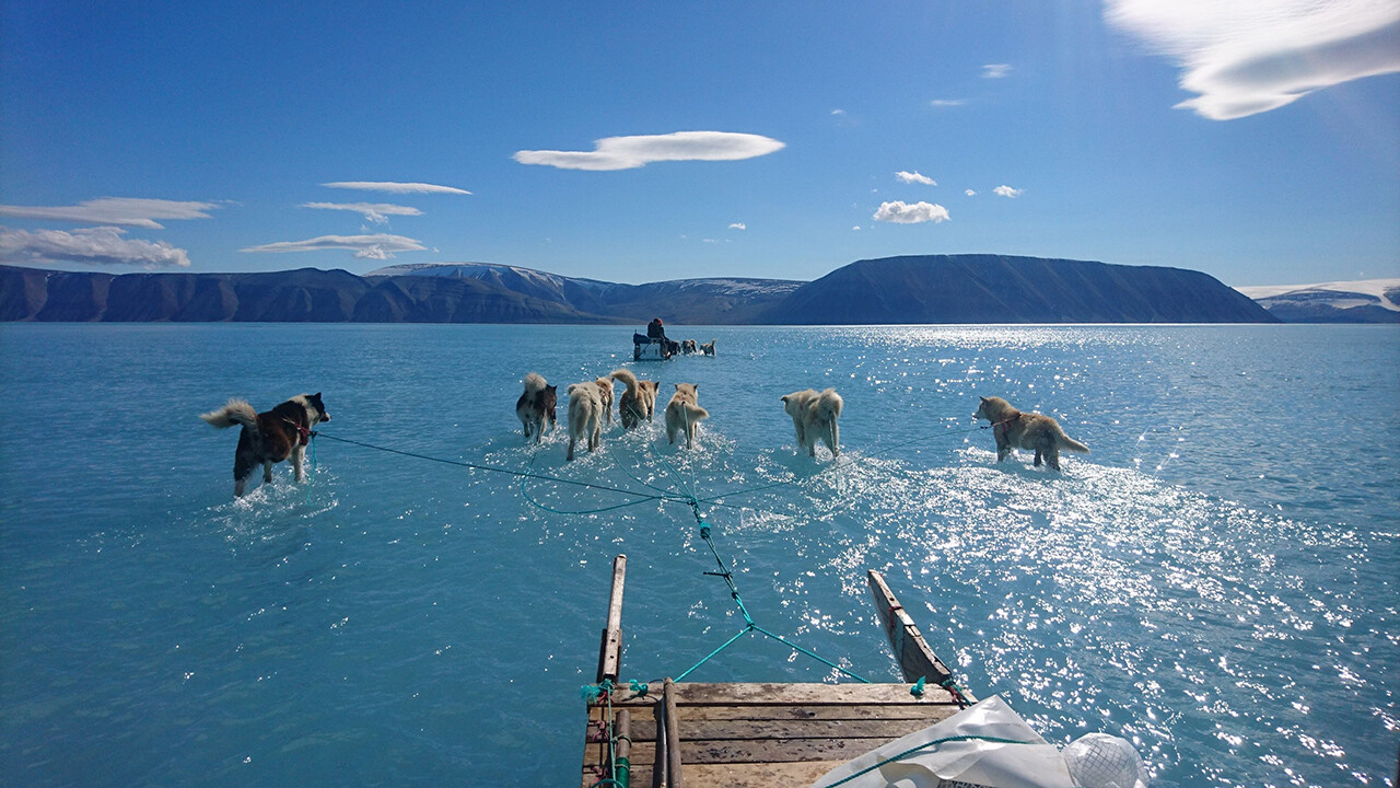 Sled dogs wade through standing water on the sea ice.