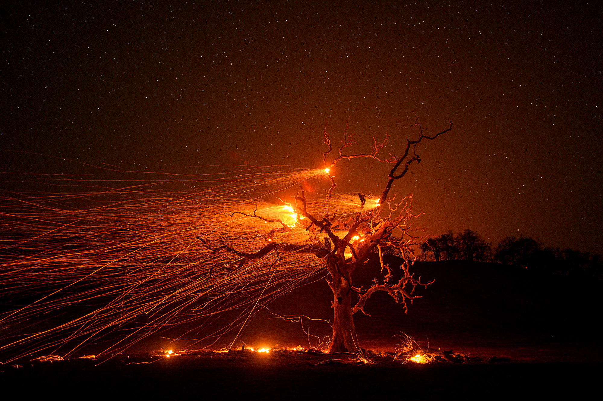 Embers fly off a tree as the Kincade fire burns in Kellogg, Calif.